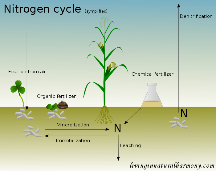 Nitrogen fertilization