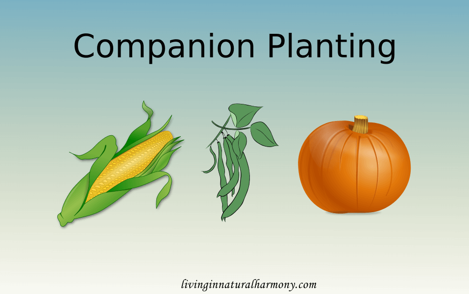 Companion Planting – Do you know which plants help each other to grow?